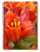Azalea Flowers Art Prints Azaleas Gilcee Art Prints Baslee Troutman Spiral Notebook