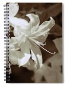 Azalea Flowers In Sepia Brown Spiral Notebook