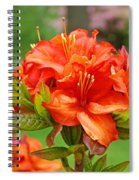 Azaleas Art Home Decor 14 Orange Azalea Flowers Art Prints Greeting Cards Spiral Notebook