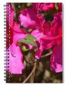Azaleas In Magenta Spiral Notebook