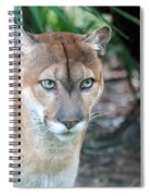Babcock Wilderness Ranch - Oceola The Panther Gazing Spiral Notebook