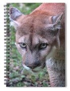 Babcock Wilderness Ranch - Oceola The Panther On The Prowl Spiral Notebook