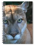 Babcock Wilderness Ranch - Oceola The Panther Pleasantly Peering Spiral Notebook