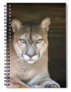 Babcock Wilderness Ranch - Portrait Of Oceola The Panther Spiral Notebook