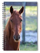 Babcock Wilderness Ranch - Red Horse Portait Spiral Notebook