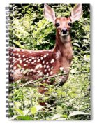 Babe In The Woods Spiral Notebook