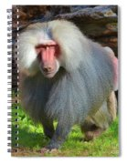 Baboon Stalking Spiral Notebook