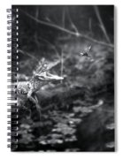 Baby Alligator Vs Mud Wasp Spiral Notebook