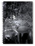 Baby Alligators On Board Spiral Notebook