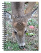 Baby Backyard Button Buck Spiral Notebook