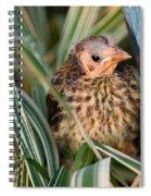 Baby Bird Hiding In Grass Spiral Notebook