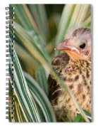 Baby Bird Peering Out Spiral Notebook