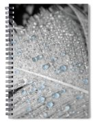 Baby Blue Dew Drops On Feather Spiral Notebook