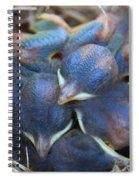 Baby Bluebirds Spiral Notebook