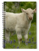 Baby Calf With Bluebonnets Spiral Notebook