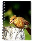 Baby Cardinal Spiral Notebook