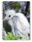 Baby Egret Spiral Notebook
