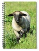 Baby Ewe Spiral Notebook
