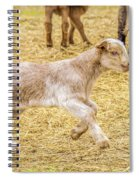Baby Goat On The Run Spiral Notebook