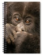 Baby Gorilla Close-up Hiding Mouth With Hands Spiral Notebook