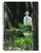 Baby Great Egrets With Nest Spiral Notebook