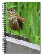 Baby House Wren Spiral Notebook