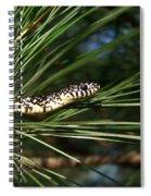 Baby King Snake Spiral Notebook