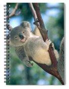 Baby Koala Bear Spiral Notebook