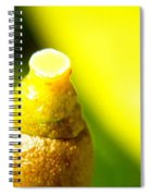 Baby Lemon On Tree Spiral Notebook
