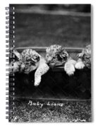 Baby Lions, C1900 Spiral Notebook