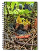 Baby Mockingbirds Spiral Notebook