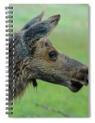 Baby Moose With Dew Spiral Notebook