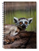Baby Ring-tailed Lemur Spiral Notebook
