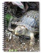 Baby Tortoise Spiral Notebook