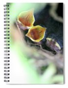 Baby Wrens In The Flowers 338 Spiral Notebook