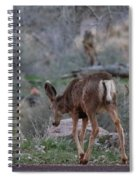 Back Into The Woods - 2 Spiral Notebook