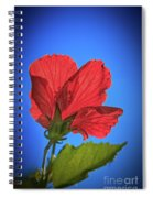 Back Lighting The Red Hibiscus  Spiral Notebook