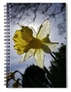 Backlit Daffodil Spiral Notebook