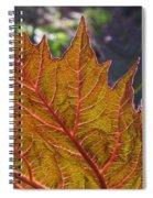 Backlit Leaf 2 Spiral Notebook