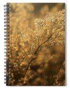 Backlit Wildflower Seeds In Autumn Spiral Notebook