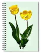 Backlit Yellow Tulips Spiral Notebook