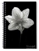Backside Daffodil Dew Spiral Notebook