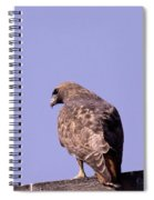 Backside Of A Hawk   Spiral Notebook