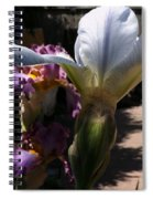 Backyard 4 Spiral Notebook