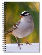 Backyard Bird - White-crowned Sparrow Spiral Notebook