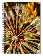 Backyard Bokeh Spiral Notebook