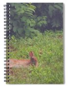 Backyard Bunny Spiral Notebook