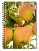 Backyard Garden Series - Apples In Apple Tree Spiral Notebook