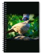 Backyard Garden Series - Quail In A Pear Tree Spiral Notebook