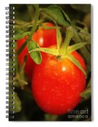 Backyard Garden Series - Roma Tomatoes Spiral Notebook